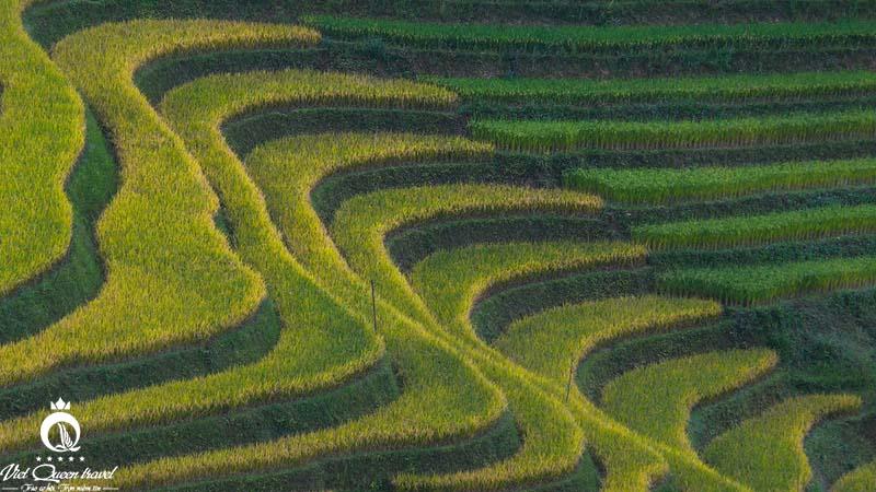 Hình ảnh của Lạc lối giữa mùa vàng La Pán Tẩn (Mù Cang Chải)